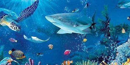 Sea-Animals-Fish-444x222.jpg