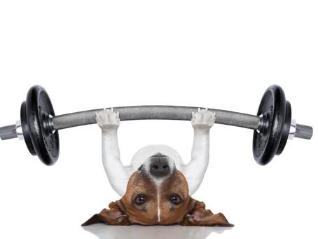 Basics rund um Deine Muskeln
