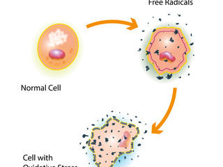 What are those pesky free radicals I hear about