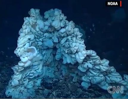 Huge sponge species discovered