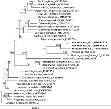 We are populating the very empty space of genetic markers for cave animals. In this publication in M