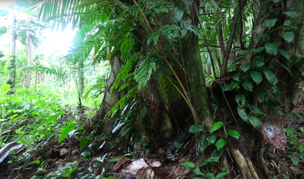 Brazil has the greatest plant biodiversity in the world.