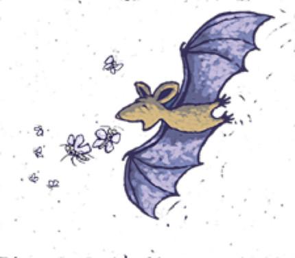 Identificação da dieta de morcegos insetívoros por DNA no guano. Parabéns Ana.