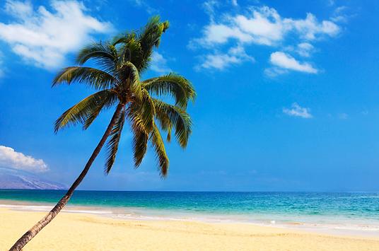 o-HAWAII-PALM-TREES-facebook.png