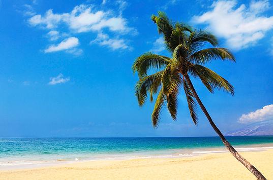 o-HAWAII-PALM-TREES-facebook.jpg