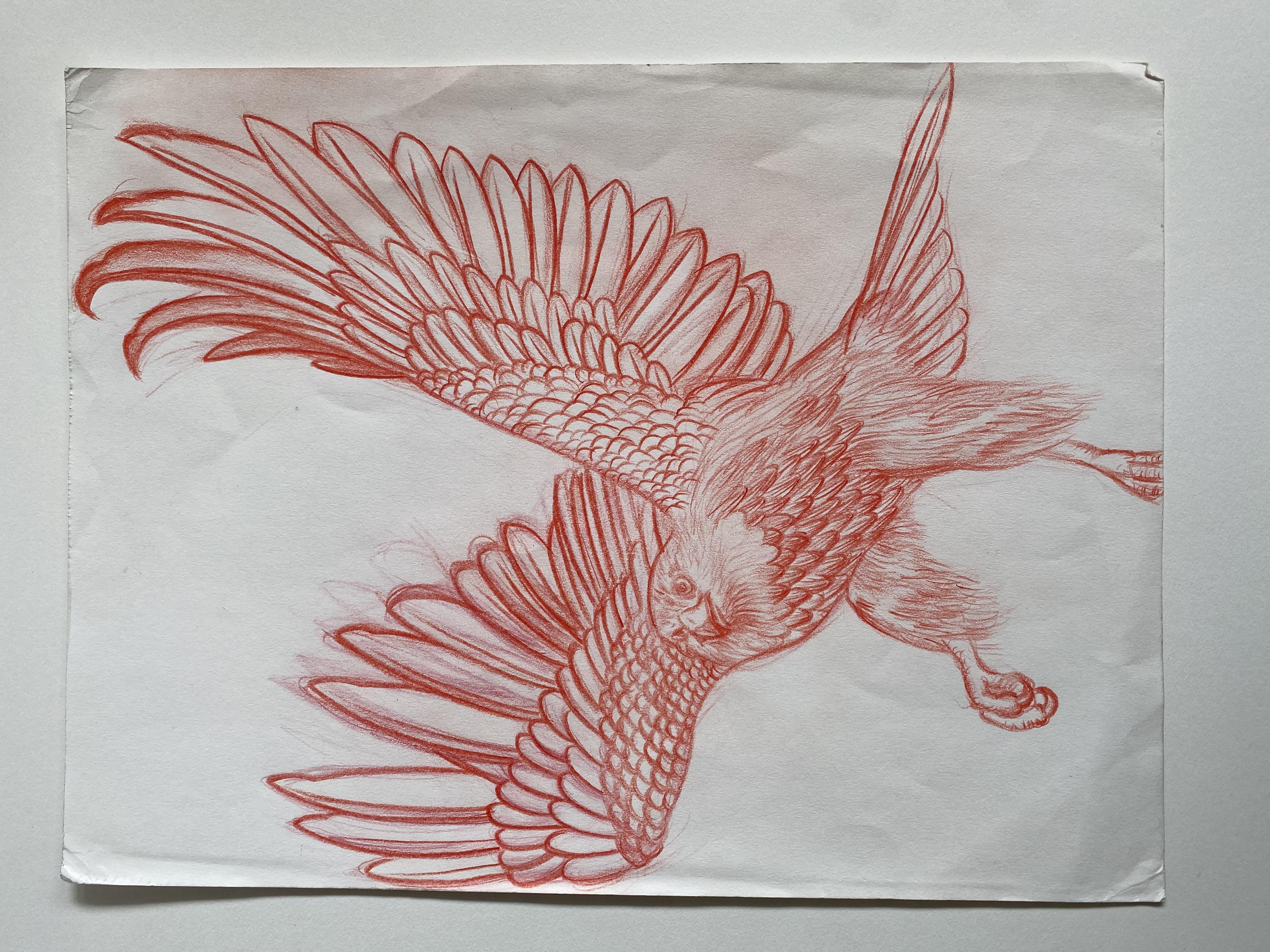"""""""Falcon"""""""