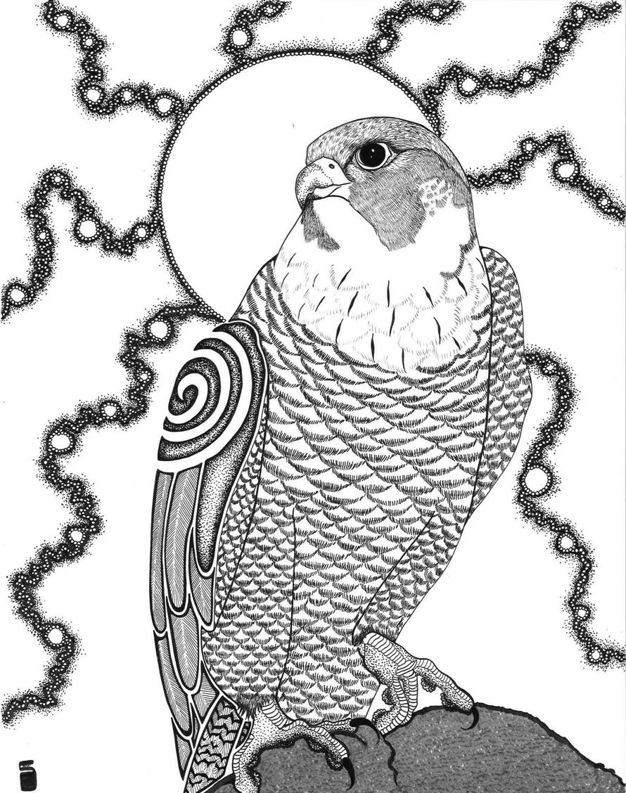 """""""Peregrine Falcon"""""""