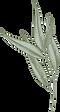 botanical 1.png