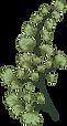 botanical 3.png