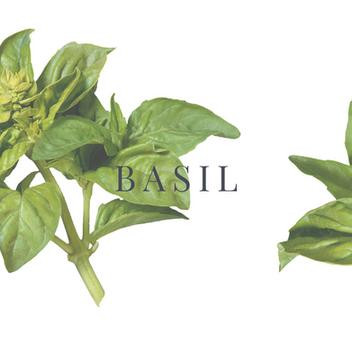 Herbs: Using them & Health benefits (Part I)