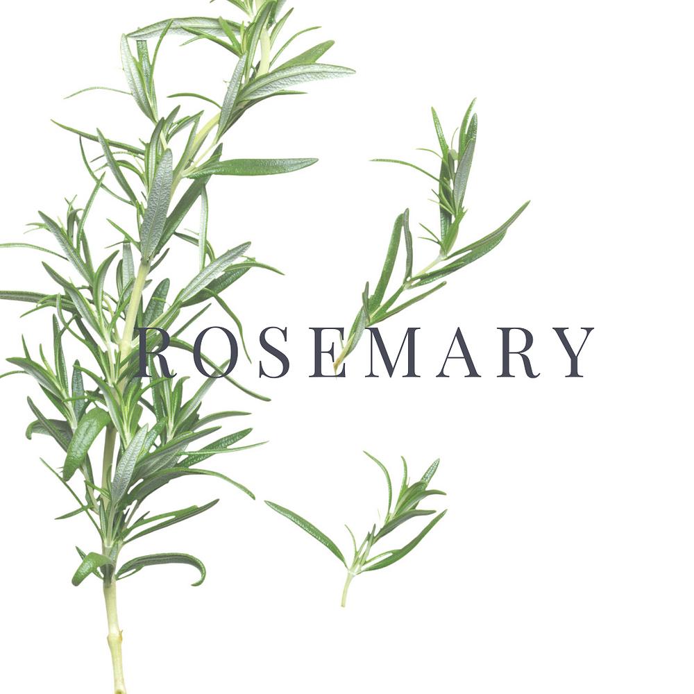 Rosemary photo credit Canva