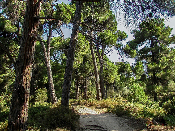 skiathos-holiday-tips-enchanted-forest.w