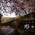 桜と杉ヶ瀬