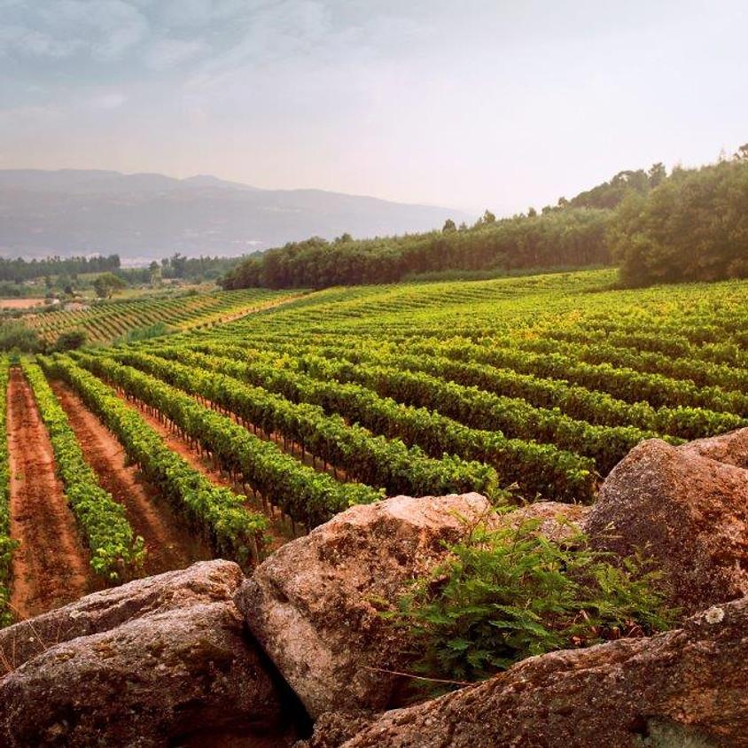 Dao Wines Masterclass