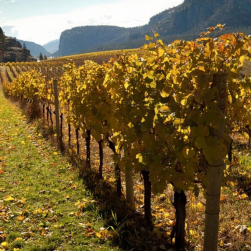 Wines of Canada Trade Tasting