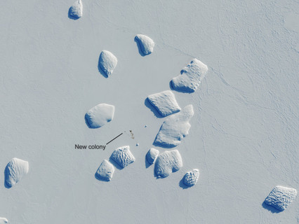 ESA's Copernicus Sentinel-2 discovers new penguin colonies from space