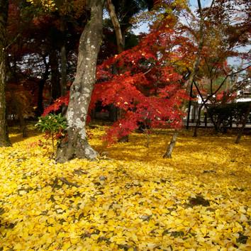 京都‧紅葉狩