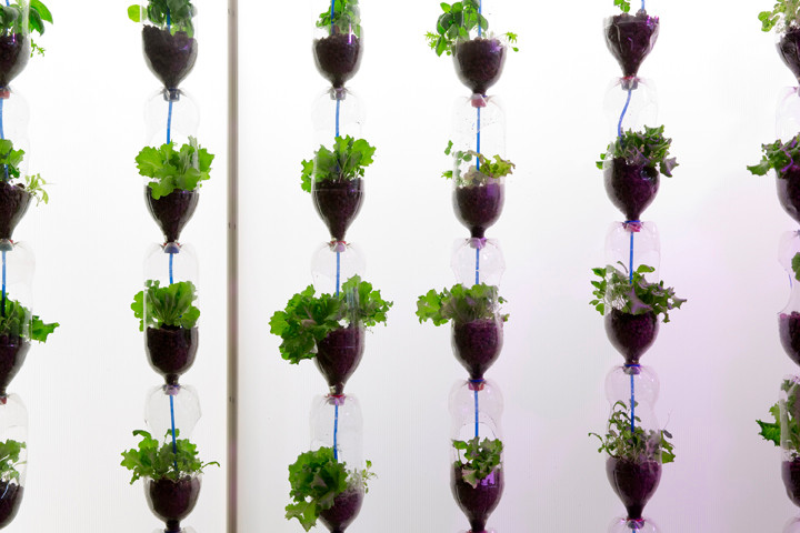 Simone Frazier and Seung-Min Lee, Vertical Hydroponic Salad Garden, 2014