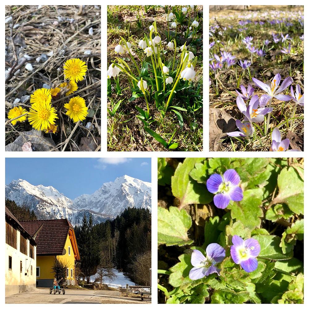 Frühling am Ferienhof Hintergrabenbauer