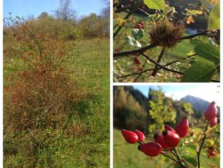 November - Spätherbst