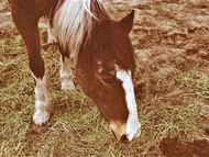 mare out to pasture (Logan, Utah)