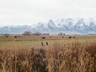 Untitled (Logan, Utah)