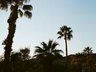 palm trees in silhouette (Borrego Springs, California)