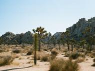 Untitled (Joshua Tree National Park, California)