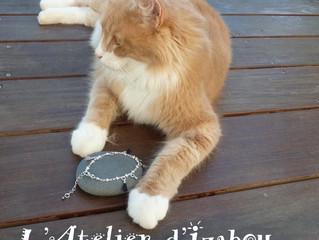 Quand mon chat hésite à offrir un bracelet en chaîne étoilée agrémenté de pompons noirs et gris !