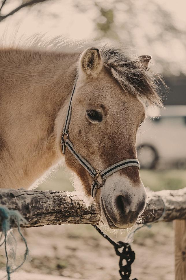 HORSE%20TIE_edited.jpg