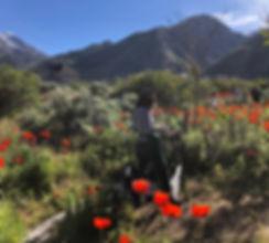 poppies copy_edited.jpg