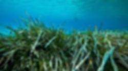 seagrassacru.jpg