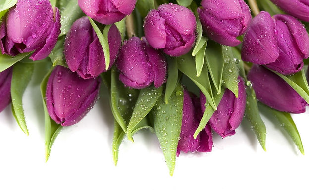 Nature_Flowers_Bouquet_of_tulips_033521_