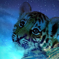 desktop-animal-galaxy-1651535-scaled.jpg