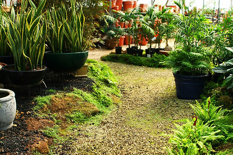 Landscape Garden Design | 5 Elements Landscape