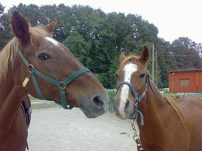 2 cavalli.jpg