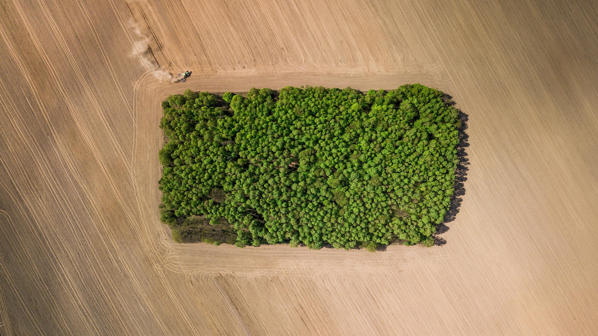 mazury trees1.jpg