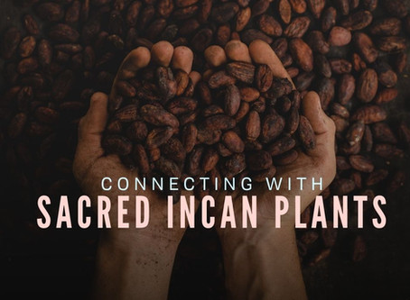 Connecting with Sacred Incan Plants