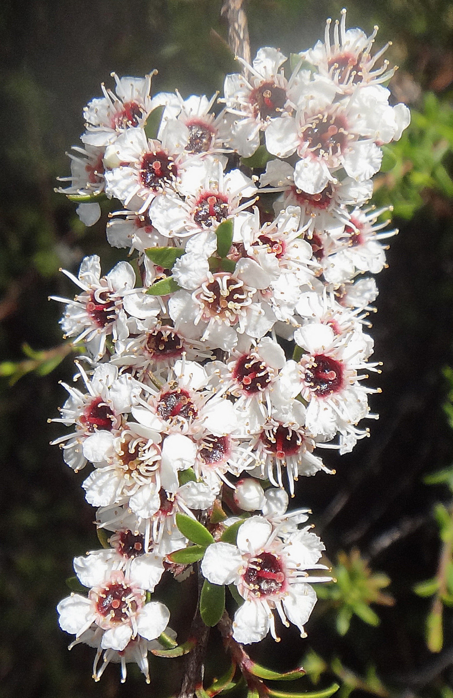 Yoga Flower Growth Strength