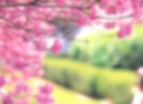 Cherry%20Tree_edited.jpg