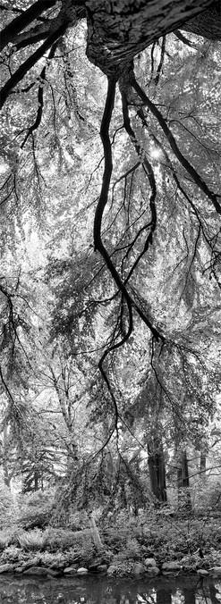Untitled_Panorama4.jpg