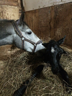 Valdamora and foal.JPG