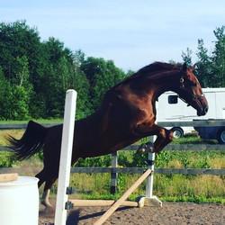 Soren free jumping