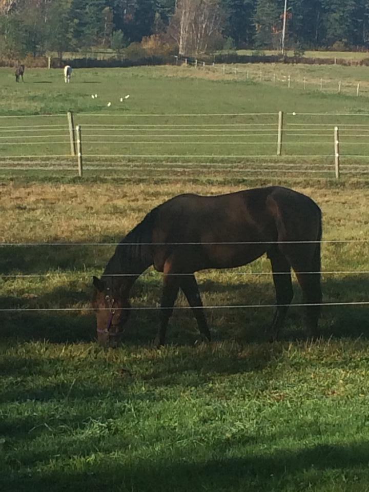 Stallion paddock.jpg