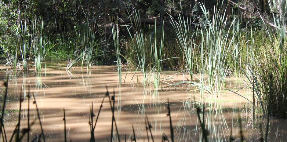 Watagan Water Hole 2