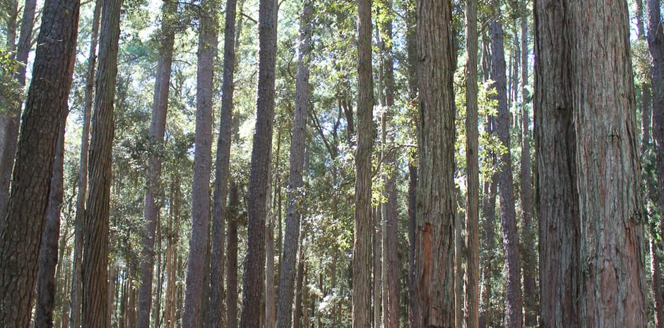 Watagan Forest