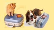 Passageiros poderão não pagar mais tarifa extra para transportar pets em viagens intermunicipais