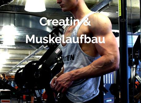 Creatin Kur - Hilft sie beim Muskelaufbau?