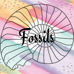 Fossils 3.png