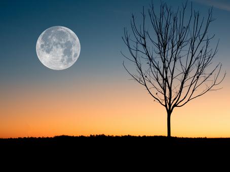 Gurú Purníma: quando a lua cheia ilumina o caminho